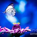 Neon Butterfly by Carolina Mendez