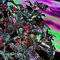 Neon Coleus by Sylvia Thornton