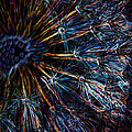 Neon Dandelion by Ernie Echols