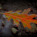 Neon Leaf Afloat by Greg Thiemeyer