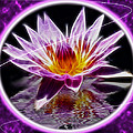 Neon Lotus by Shane Bechler