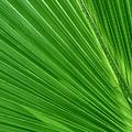 Neon Palm Reader by Sean Allen