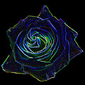 Neon Rose 5 by Ernie Echols