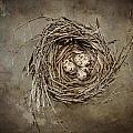 Nest Eggs by Carol Leigh