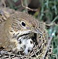 Nest In A Tree by Susan Leggett