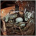 Nest In Cloche by Jen  Brooks Art