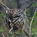 Nest by Joseph Yarbrough