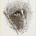Nest Of Magpie by Litz Collection