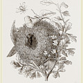 Nest Of Wren by Litz Collection