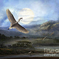 Nesting Egrets by Melinda Hughes-Berland