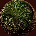 Nesting Pine Orb by Tikvah's Hope