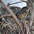 Nesting by Rebecca Jayne