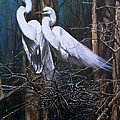 Nesting Snowy Egrets by Dreyer Wildlife Print Collections