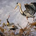 Nesting Time by Debra and Dave Vanderlaan