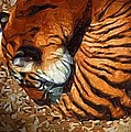 Nestled Tiger by Michael Hurwitz