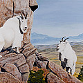 Nevada Mountain Goats by Darcy Tate