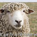 Never Ask For A Full-bodied Perm by Jeff Abrahamson