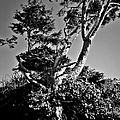 Nevermore by Absinthe Art By Michelle LeAnn Scott