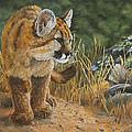 New Adventures - Cougar Cub by Johanna Lerwick