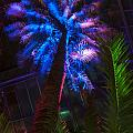 New Age Tropical Palm by Darleen Stry