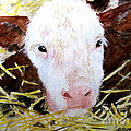 New Born On The Farm by Carol Grimes