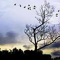 New Dawn by Brian Wallace