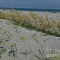 New Dunes On The Atlantic by Paddy Shaffer