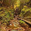 New England Waterfall Gorge by Adam Jewell