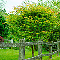 New England Wooden Fence by Michael Moriarty