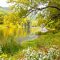 New Englands Early Autumn by Karol Livote