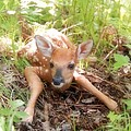 New Fawn In The Forest by Angie Rea