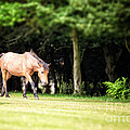 New Forest Pony by Jane Rix