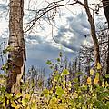 New Generation - Casper Mountain - Casper Wyoming by Diane Mintle