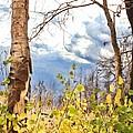 New Generation - Mixed Media - Casper Mountain - Casper Wyoming by Diane Mintle