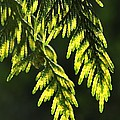 New Growth 25859 by Jerry Sodorff