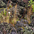 New Growth In A Desolate Area by Bob Phillips