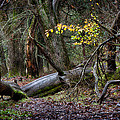 New Growth In An Old Forest by Robert Woodward