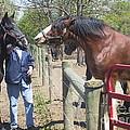 New Horse In The Herd by Conni Schaftenaar