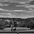 New Jersey Landscape With Horses by Steven Richman