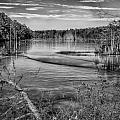 New Jersey Pinelands by Louis Dallara