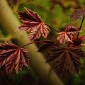 New Leaves For Napanee by John Herzog