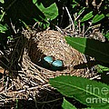 New Life - Robin's Nest by Barbara Griffin