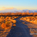 New Mexico Back Country Road by Roena King