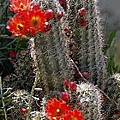 New Mexico Cactus by Kurt Van Wagner