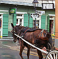 New Orleans - Bourbon Street Horse by Frank Romeo