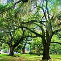 New Orleans City Park - Live Oak by Deborah Lacoste