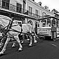 New Orleans Cortege  by Steve Harrington