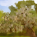 New Orleans Spanish Moss On Live Oaks by Christine Till