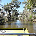 New Orleans - Swamp Boat Ride - 1212122 by DC Photographer