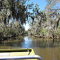 New Orleans - Swamp Boat Ride - 1212123 by DC Photographer
